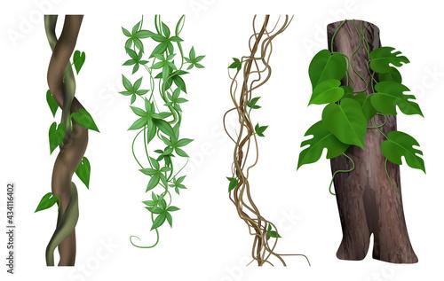 Canvas Tropical lianas