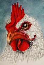 Illustration - A Detailed Portrait Of A Young Rooster Drawn With Markers And A Liner