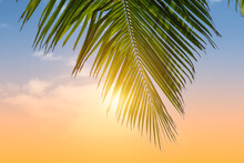 Palm Leaf Against Colorful Sunny Sky.