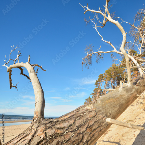 Stampa su Tela Baltic sea shore during low tide on a sunny summer day, Latvia