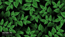 Natural Realistic Pattern Branch With Fresh Green Leaves. Colorful Dark Background. Trendy Repeat Fashion Print Wallpaper Or Fabric. Cute Vector.