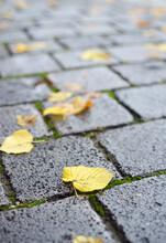 Yellow Leaves On A Cobblestone Street Autumn Season