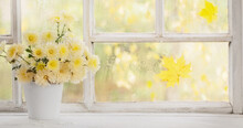 Chrysanthemums In  Vase On  Windowsill In Autumn