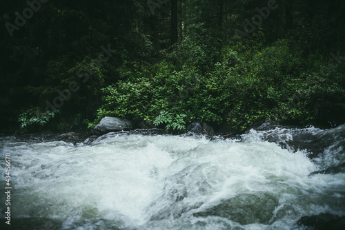 Green forest landscape with wild thickets near powerful mountain river Fototapeta