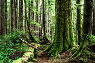 Eden Grove, Port Renfrew, Vancouver Island, BC Canada