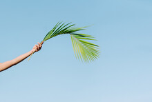 Crop Unrecognizable Person With Outstretched Arm And Wavy Green Palm Tree Foliage In Hand On Blue Background