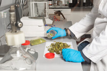 Side View Of Crop Unrecognizable Male Biologist In Uniform Studying Dried Marijuana Flower Buds On Laboratory Table Between Professional Equipment