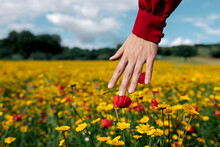 Crop Anonymous Female Touching Blooming Red And Yellow Flowers On Summer Meadow In Daytime