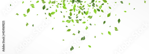 Fotografiet Lime Leaves Spring Vector Panoramic White