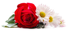 Bouquet Of White Chamomile And A Red Rose.