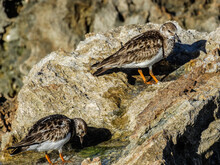 Tiny Beach Birds On The Rocks