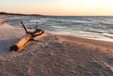 Fototapeta Fototapety z morzem do Twojej sypialni - Morze bałtyckie Korzeń konar pień plaża zachód słońca