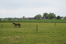Brown Horse Green Field Yellow Buttercups Farm House Barn And Silos In Day Time Sky