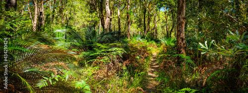 Foto Bush walking track behind 7 mile beach Gerroa NSW Australia, native banalay tree