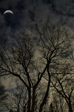 Tree Silhouettes On A Moonlit Night
