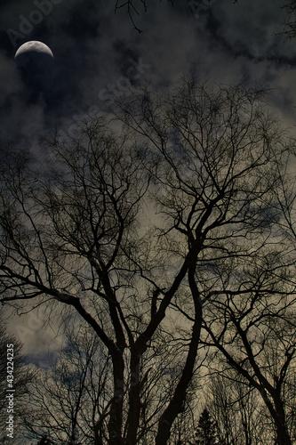 Canvas-taulu Tree silhouettes on a moonlit night