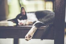 Beautiful Black And White Homeless Kitten Sleeping
