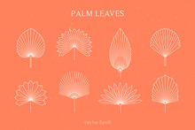 Set Of Abstract Palm Leaves In A Trendy Minimal Linear Style. Vector Tropical Leaf Boho Emblem. Floral Illustration