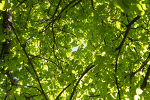 Green Foliage Of Tree Crowns