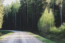 Beautiful Nature Landscape View Of Gravel Road In Forest. Spring Evening Version With Long Tree Shadows.