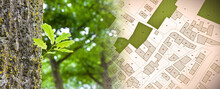 Nature And City - Concept Image With Leaf Of A Tree In A Public Park And City Map