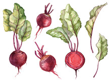 Set Of Hand Panted Watercolor Ripe Beetroot With Leaves