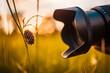 Leinwandbild Motiv Macro photography lens close to meadow flower grass with empty bee nest on the grass in a park. Hobby, nature outdoor, recreational freedom activity. Idyllic nature sunset, camera lens macro