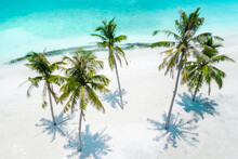 Aerial View Of A Group Of Palm Trees With A Hammock At The Beach Front, Maldives, Laccadive Sea.