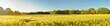 Leinwandbild Motiv Green Wheat Field in Summer near Sunset - Panorama