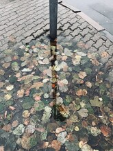 High Angle View Of Leaves On Footpath During Rainy Season