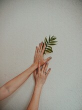Cropped Hands Of Woman Holding Leafs On Wall