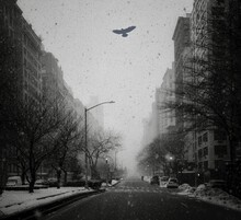 Park Avenue During A Blizzard With A Bird Flying Through The Snow