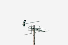 Black And White Magpie Bird Sitting On A TV Antenna Against A White Sky