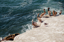 High Angle View Of Pelicans On Rocks By Sea