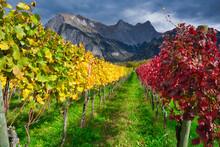 Weinbaugebiet, View Of Vineyard Against Sky