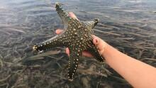 High Angle View Of Hand Holding Beautiful Green Starfish