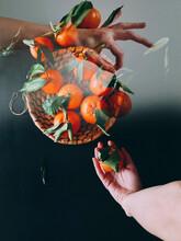 Surreal Portrait Of Hands Holding Citrus Fruits