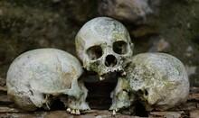 Skeleton Of Men