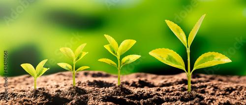 Fotografia Growing plant, earth day, environmental concept