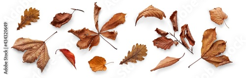 Fotografiet A collection of dried, dry autumn tree leaves isolated on a white background for autumn thanksgiving designs
