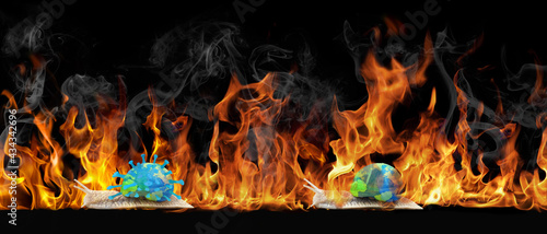 Fotografiet Feuerwand Scnnecke mit Erde auf dem Rücken, halb verbrant, Schnecke mit Erde und