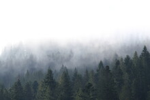 Landscape Photography, Morning Mountain Forest In The Early Morning, Ukraine Carpathians