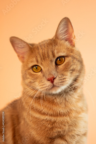 Fototapeta Cat On Pastel Background