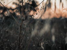 Silhouettes Of Flowers At Sunset With Dark And Spooky Style.