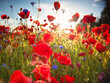 Nice colorful poppy field in spring
