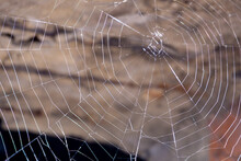 Cobweb In An Abandoned House. Spiderweb Pattern On A Blurred Background.