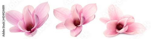 Fotografie, Obraz Set with beautiful magnolia flowers on white background