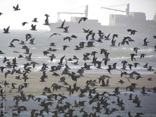 Carta da parati Migración aves