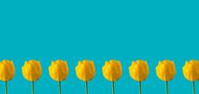 Yellow Tulips On Sky Blue Background. Summer Wallpaper With Copy Space. Creative Spring Pattern.