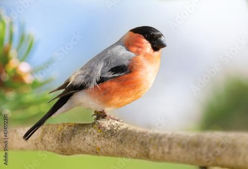 Fotografiet Little bird sitting on branch over green background